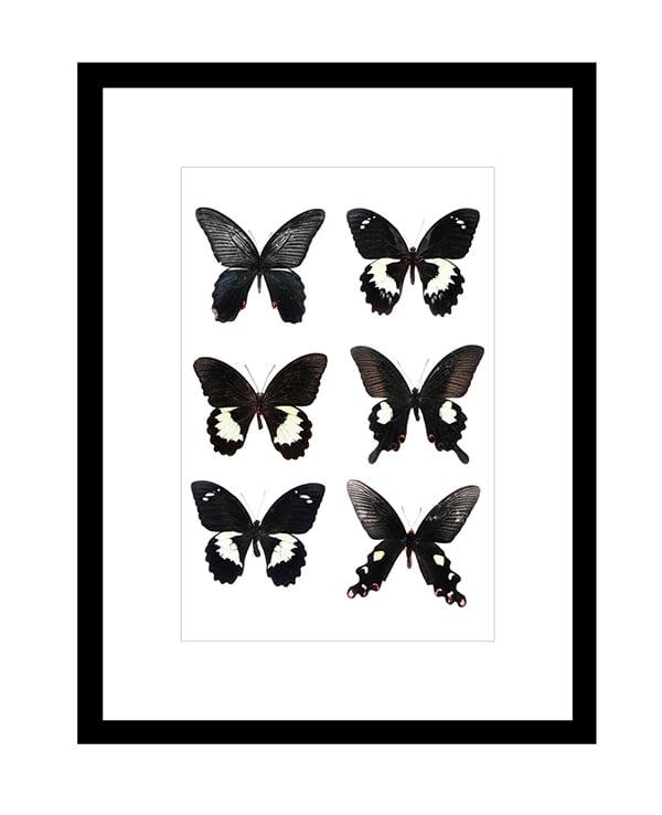 Digitaldruck Butterflies Dark, Image via Westwing Now