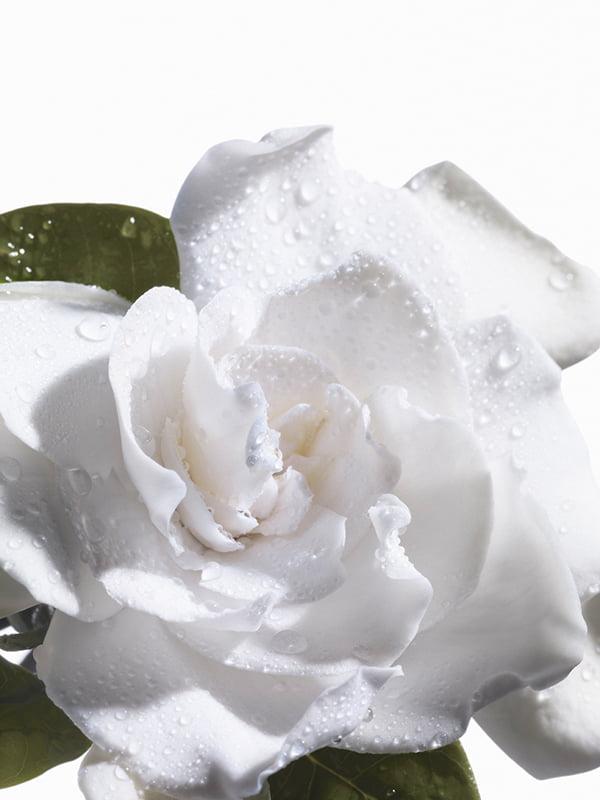 Bottega Veneta Eau Sensuelle Ingredients: Gardenia