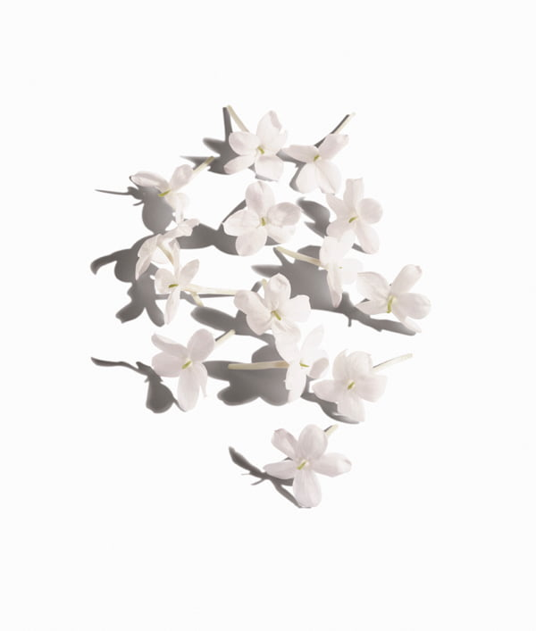Bottega Veneta Eau Sensuelle Ingredients: Jasmin sambac