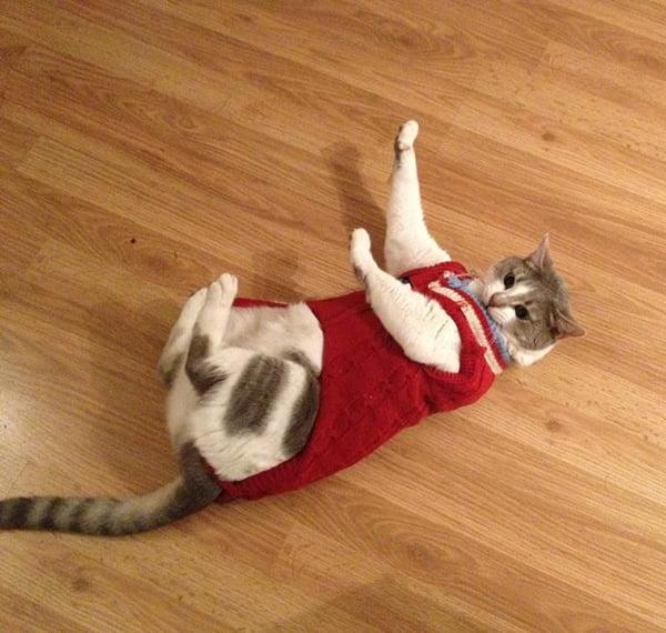 CatSweaterReddit