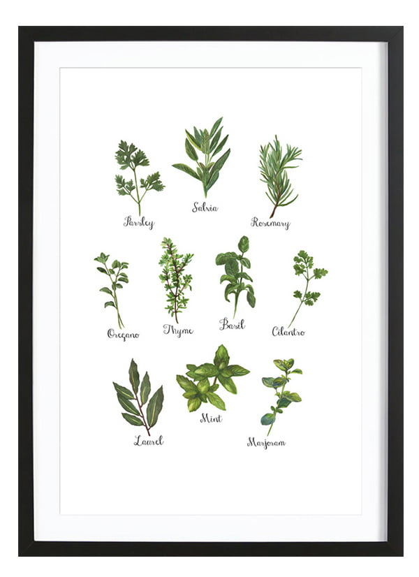 Junique Poster Herbs Collection